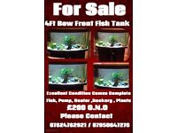 4FT Bow front Black fish tank complete set up.