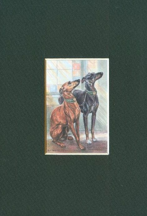 * Whippet - Dog Art Print - CLEARANCE