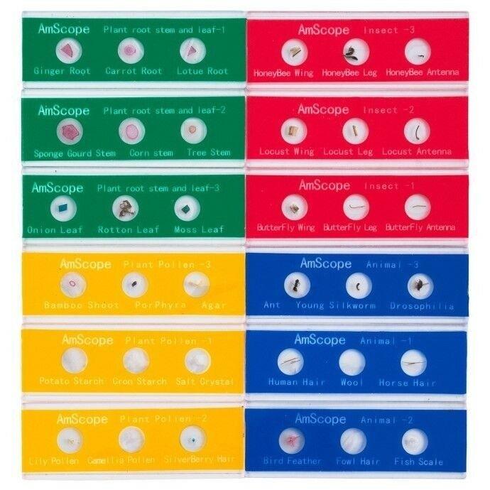 36 Color-Coded Specimen Zoological And Botanical Slide Kids Set