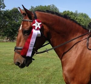 Lovely Clyde x Thoroughbred for Part-Lease London Ontario image 2