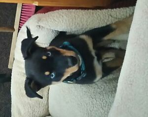 Looking for a friend for my puppy