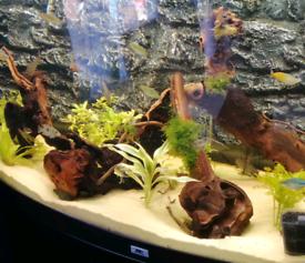 Aquarium bogwood