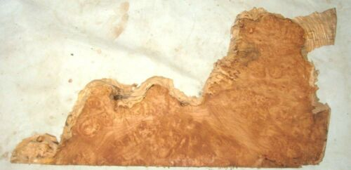 MAPLE BURL SLAB LIVE EDGE TURNING CRAFTING WOODWORKING APPROX 20x12x.75 IN