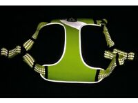Hi-Visibility Cat/Small Dog harness