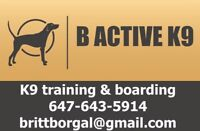 Dog Training & In-Home Boarding