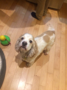 Looking for a Live-in Pet Sitter