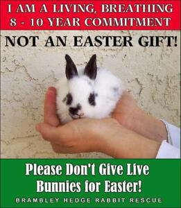 Important Things To Know about Bunnies