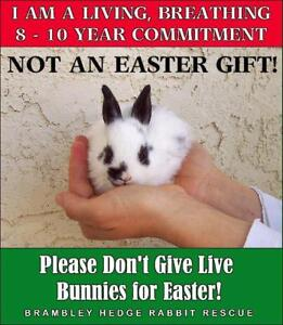 Things to know before getting a Bunny