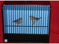 Pair of finches