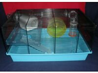 Baby Syrian hamster with upper level cage