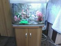AQUA ONE 620 AQUA STYLE CURVED EDGE FISHTANK WITH BEECHWOOD CABINET ONLY 6 MONTHS OLD IN MINT CONDIT