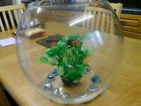 Very large fishbowl with 4 goldfish and accessories bargain