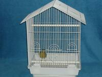 Singing male canary with new cage.