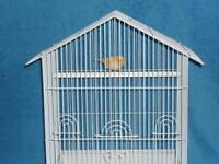 Yellow male singing canary with new cage