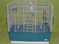 Blue budgie with cage and toys