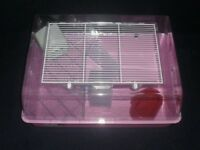 Baby Syrian hamster with cage
