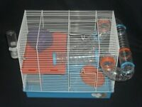 Hamster cage with baby Syrian hamster