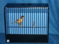 Good singing male canary with brand new cage