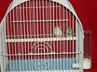Nice pair of finches with new cage