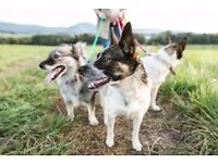 Dog Walking, Doggie Day Care & Pet Sitting in North London, Haringey