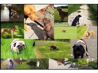 Experienced, Reliable and Professional Dog Walking / Puppy Visiting Service . Fully Insured & CRB'd