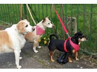 Dog Walker Knightswood area