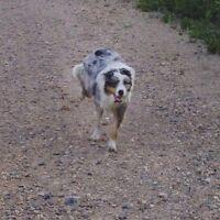 Dog walker in Hampton