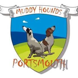 Muddy hounds of Portsmouth dog walking service.