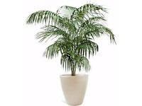 WANTED? A LARGE Tropical Houseplant for Photography Work. Maybe yours is taking Over. Can Collect.