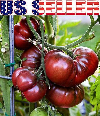 30+ ORGANICALLY GROWN Black Krim Tomato Seeds Sweet Heirloom NON-GMO Low Acid (Black Krim Heirloom Tomato)