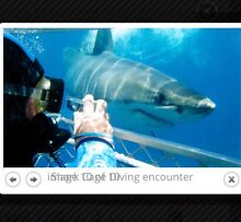 SHARK CAGE DIVING TICKET PORT LINCOLN AUS Adamstown Newcastle Area Preview