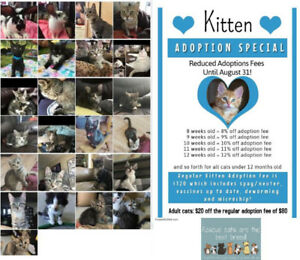 Bandaged Paws Animal Rescue Adoptable dogs, cats & rabbits