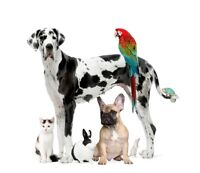 Pet Sitting Services - Dogs, Cats, and All Sorts of Critters