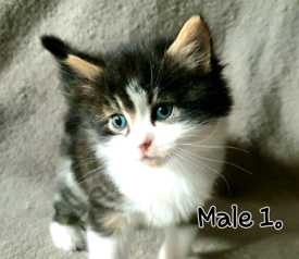 Kittens looking for forever familys 🐈