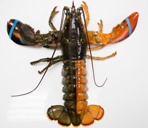 Fresh Cooked Lobster!$8.50lb