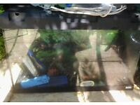 Fish Tank *Free*