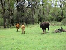 2500 acres cattle grazing land Mitchell Roma Area Preview