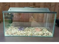 Small goldfish / Fry set up