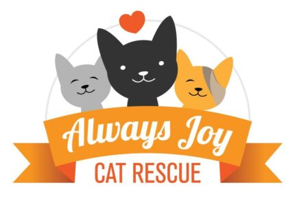 KITTEN ADOPTIONS AND RESCUE