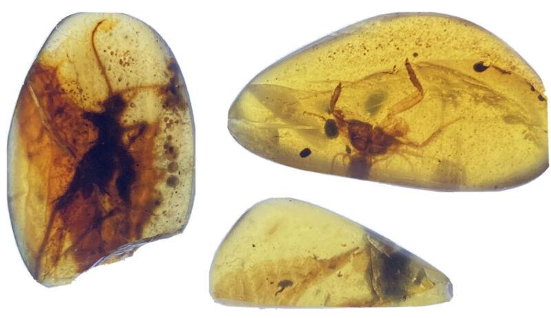 3 Beautiful Pristine Rare Insects In Genuine Burmite Ambers, 98MYO!