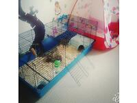 Cage for Rabbit / Guinea pig.