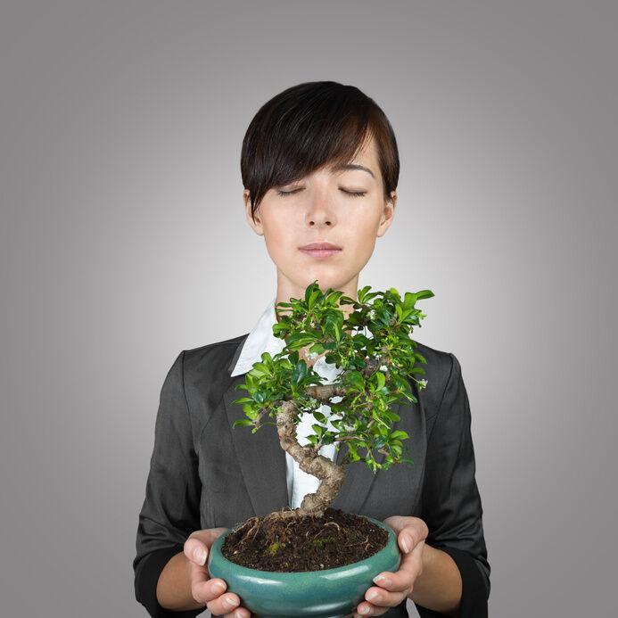 Bonsai Pohon Panduan Membeli