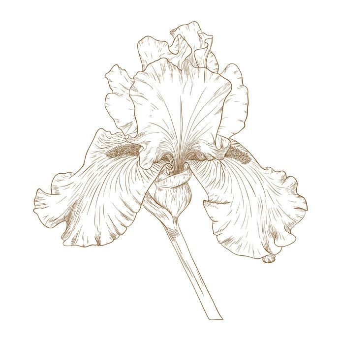 Gemütlich Erweiterte Malvorlagen Blumen Fotos ...