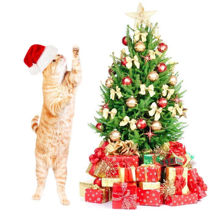 Animal-Proofing Your Christmas Tree | eBay
