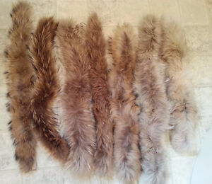 Plusieurs Col Fourrure Coyote et Loup -Fur wolf coyote Collar-