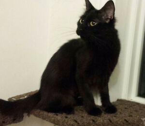 Many Black Cats @ Pet Save Never Had a Home..7056923319