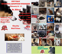 A Pet's Pantry Society Helping Animal Rescues