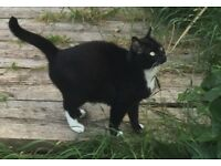 Beautiful cat looking to be rehomed - short term or long term