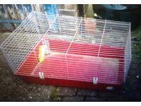rabbit cage.