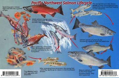 - Pacific Northwest Salmon Life Cycle & Identification Guide Card
